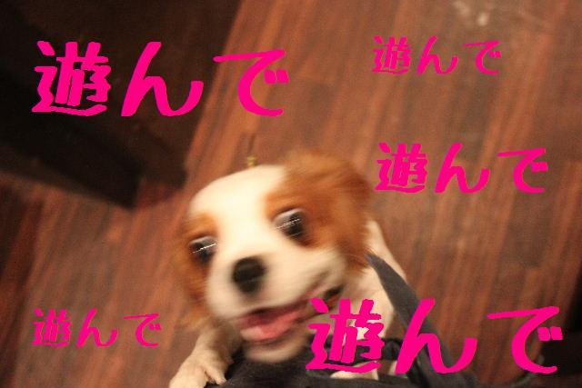 b0130018_2151172.jpg