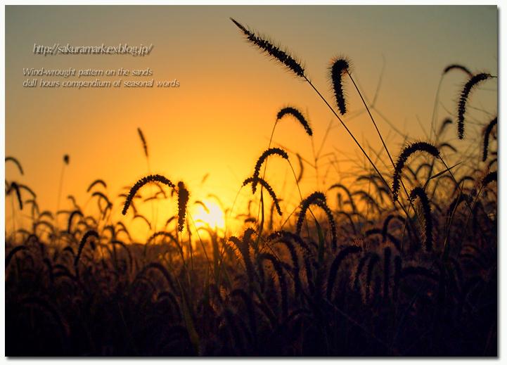 夕暮れに染まる野原。_f0235723_18512766.jpg