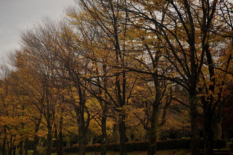 #1119 秋の樹木公園_b0177233_2021595.jpg