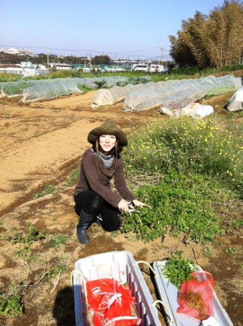 昨日播種した畝は穴空きトンネルに張替えます_c0222448_1252174.jpg
