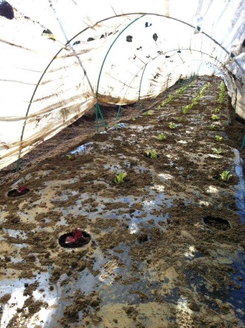 昨日播種した畝は穴空きトンネルに張替えます_c0222448_12522121.jpg