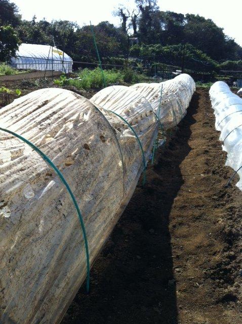 昨日播種した畝は穴空きトンネルに張替えます_c0222448_12523917.jpg
