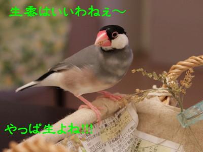 b0158061_22534072.jpg