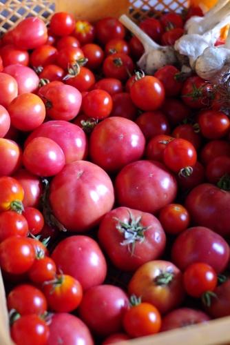 最後のトマトでトマトソース作り_c0110869_15384415.jpg