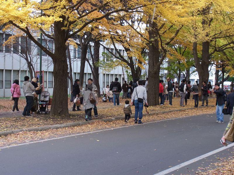 にわかイチョウ祭り_c0025115_16294269.jpg