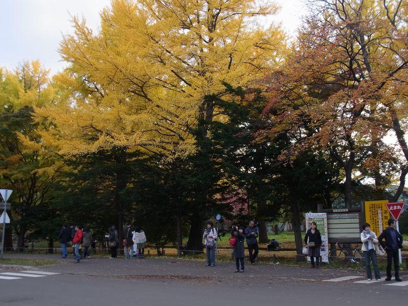 にわかイチョウ祭り_c0025115_16295218.jpg