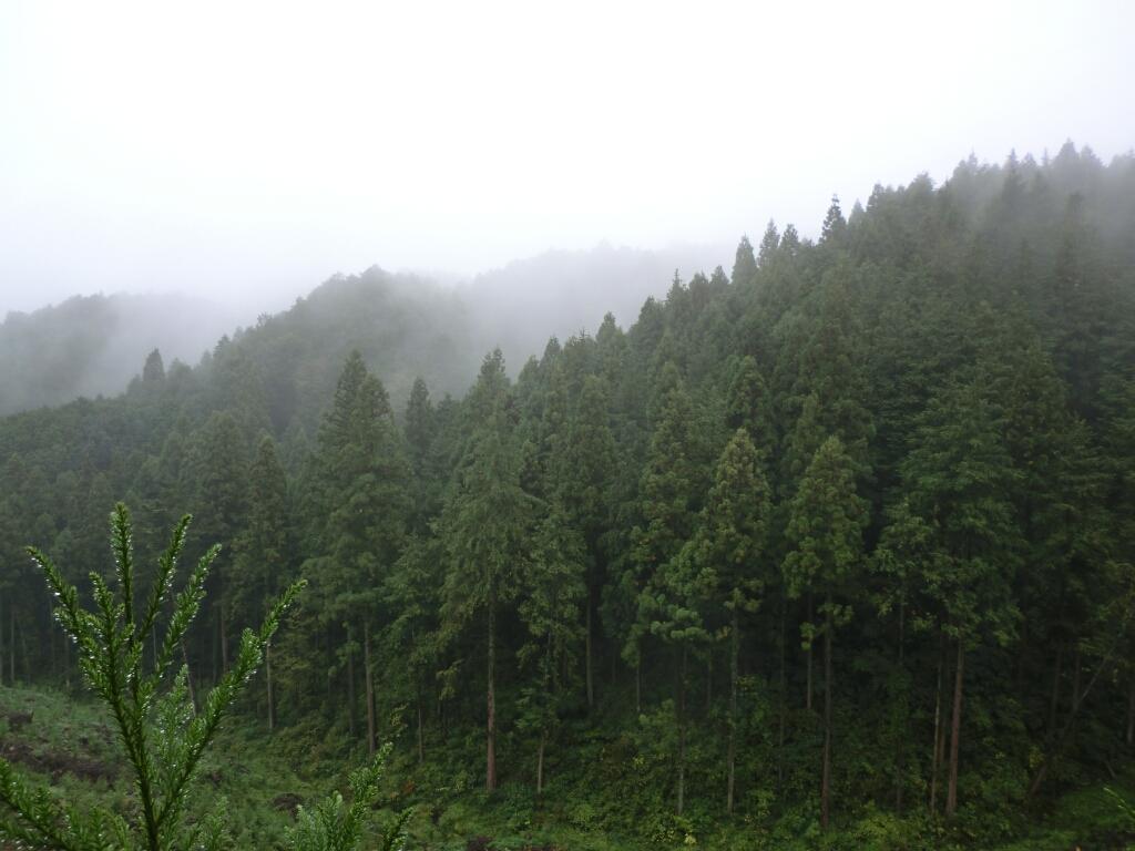 2011年10月22日 第19回 日本山岳耐久レース_d0252115_1149585.jpg