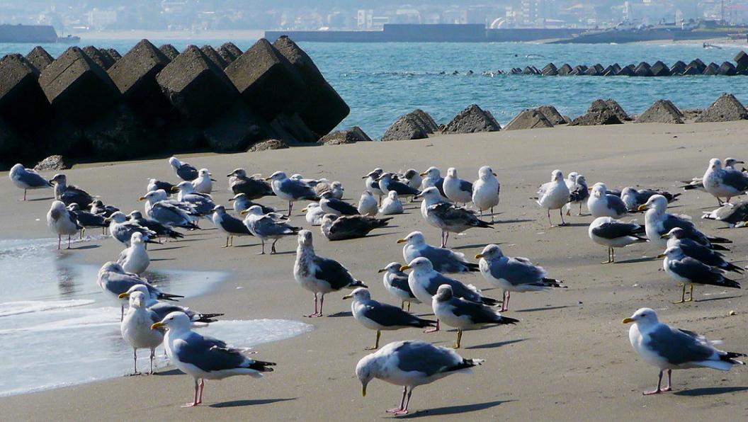 今 日 の 海 辺 は ・ ・ ・_d0039021_18383752.jpg