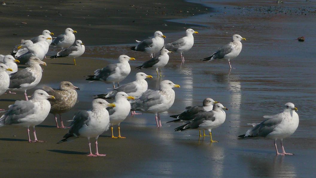 今 日 の 海 辺 は ・ ・ ・_d0039021_18384453.jpg
