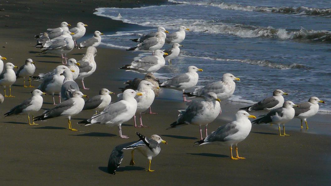 今 日 の 海 辺 は ・ ・ ・_d0039021_18385195.jpg