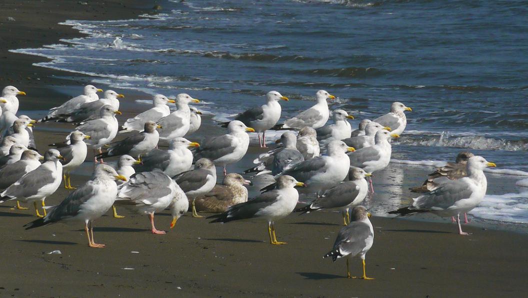 今 日 の 海 辺 は ・ ・ ・_d0039021_18385780.jpg