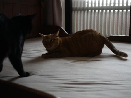 ジャイ猫 空しぇるのぇるろった編。_a0143140_234524.jpg