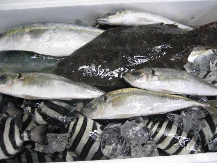 青森県 深浦から 魚が送られて来ました。_c0206545_110087.jpg