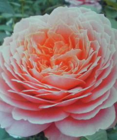 Wedding  Bouquet !_a0229658_1605579.jpg