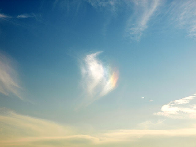 谷津バラ園 & 干潟で彩雲 (10/29)_b0006870_23544198.jpg