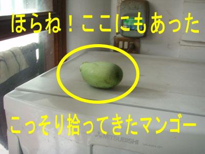 10月29日 季節外れのマンゴー & ダイビングの季節_d0086871_16565294.jpg