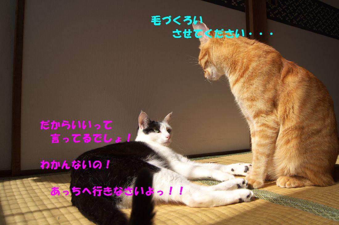 f0197682_21311162.jpg