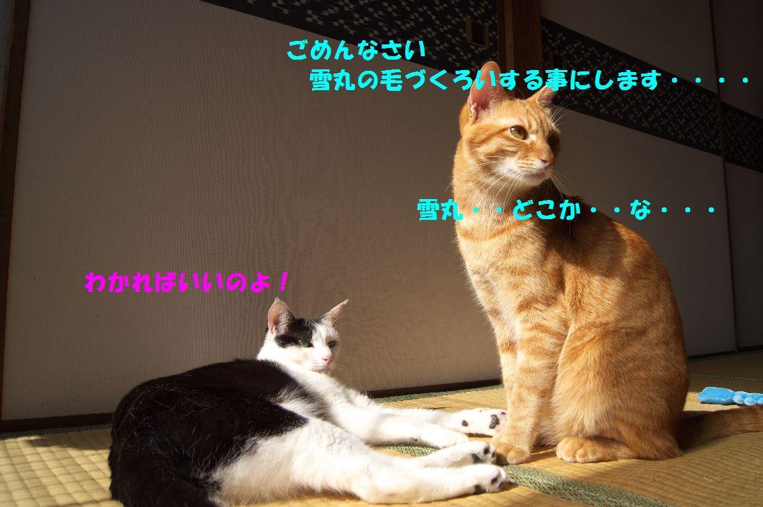 f0197682_21311998.jpg