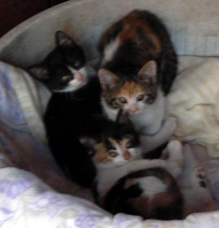 3匹の子猫_d0000995_2228819.jpg