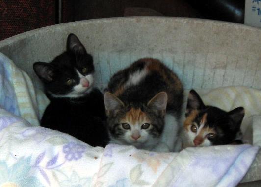 3匹の子猫_d0000995_2229225.jpg