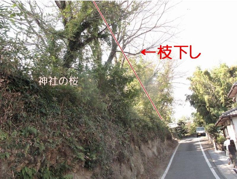 f0059498_239268.jpg