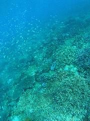 11.10.30 引き続き、宜野湾沖へ_b0100730_21473819.jpg