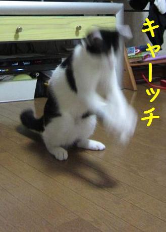 b0151748_1358217.jpg
