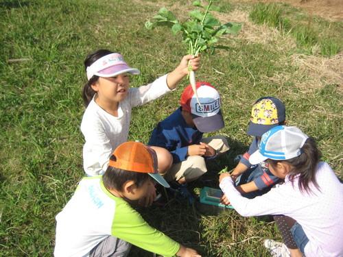 玉ねぎの苗の植え付け_f0079749_9312971.jpg