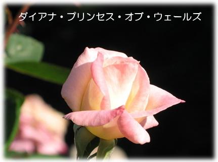 f0137096_2044530.jpg
