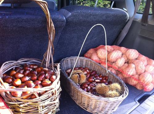 栗が美味しい季節です_f0106597_512572.jpg