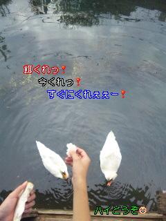 c0195031_17495423.jpg