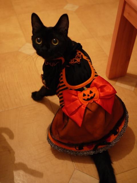 ハロウィン黒猫 ろった編。_a0143140_205302.jpg