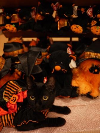 ハロウィン黒猫 ろった編。_a0143140_2154664.jpg