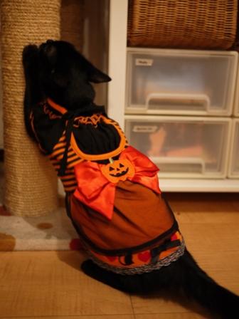 ハロウィン黒猫 ろった編。_a0143140_2174215.jpg