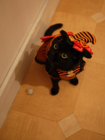 ハロウィン黒猫 ろった編。_a0143140_2181318.jpg
