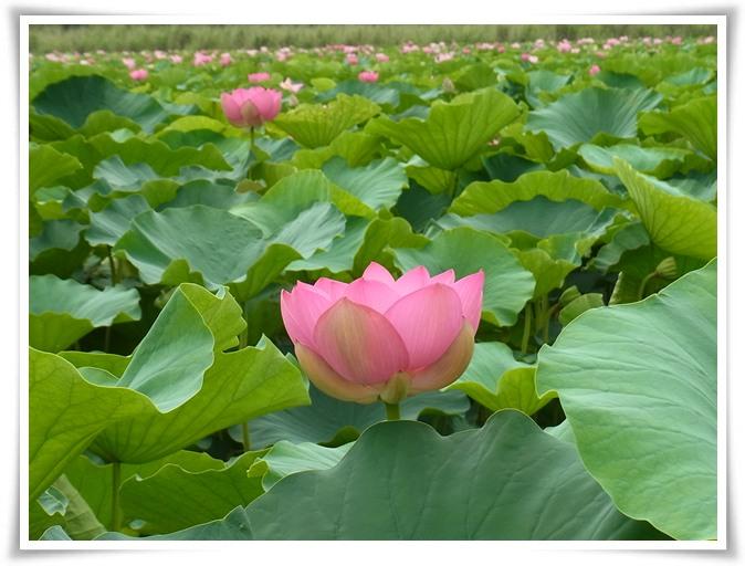 Kyoto会 - 2011 夏の陣 Ⅱ_b0025947_1983565.jpg