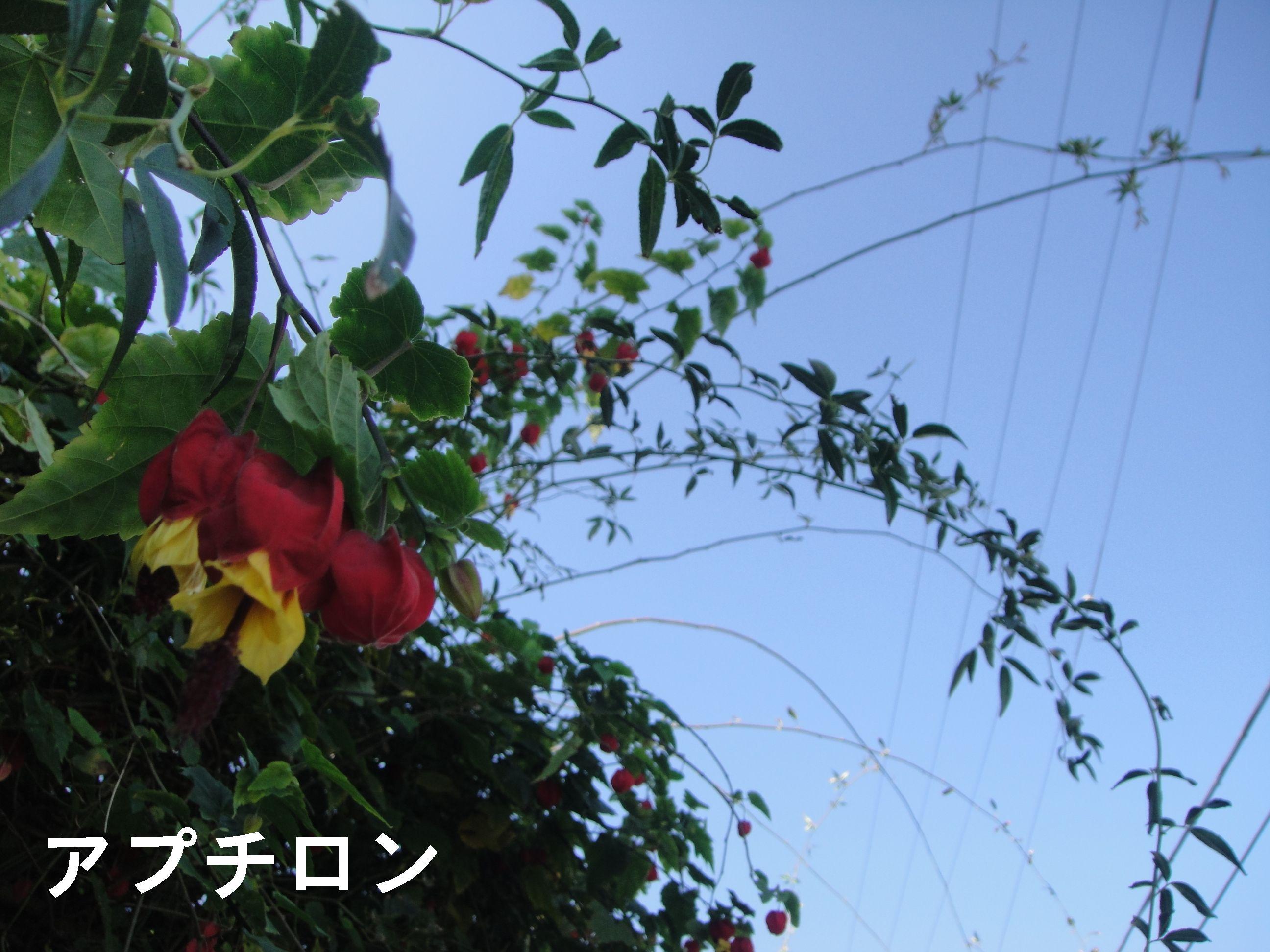 c0108460_171359.jpg