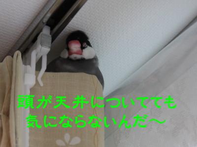 b0158061_2134981.jpg