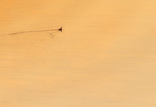 沼の夜明け 3_f0018464_20492923.jpg