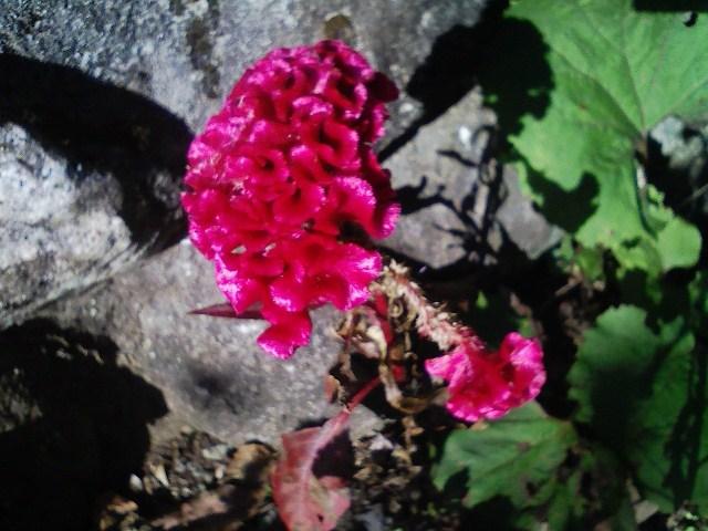 2011/10/28 土俵岳_d0233770_19245134.jpg