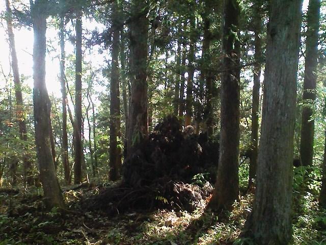 2011/10/28 土俵岳_d0233770_19461734.jpg