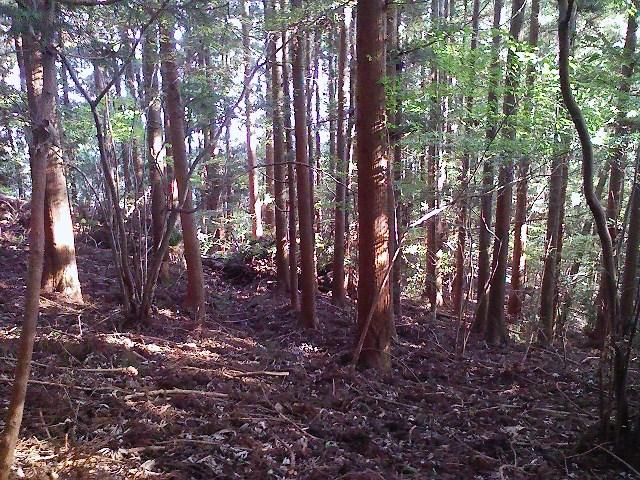 2011/10/28 土俵岳_d0233770_19593198.jpg
