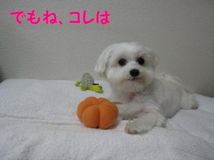 b0193480_16112035.jpg