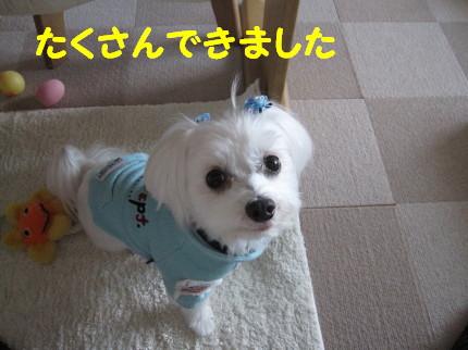 b0193480_1611571.jpg