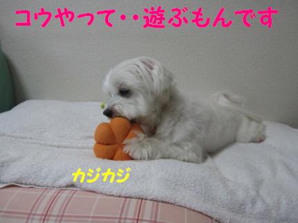 b0193480_1612121.jpg