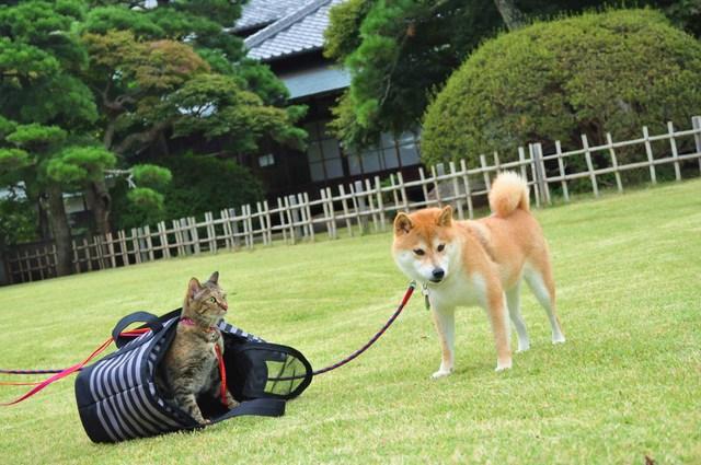 ドキドキつーちゃん_a0126590_231238.jpg