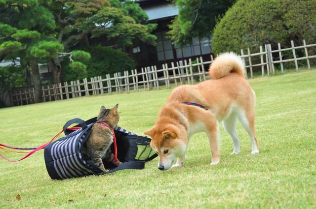 ドキドキつーちゃん_a0126590_2321228.jpg