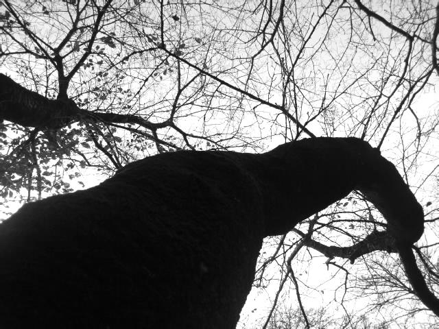 秋の、少々長すぎる散歩 #8_f0155808_22112157.jpg