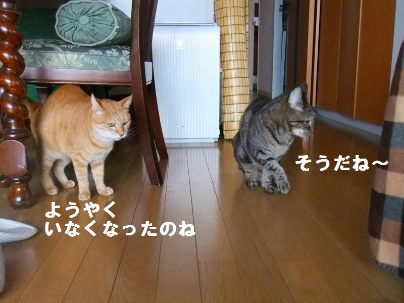 a0147921_20111587.jpg
