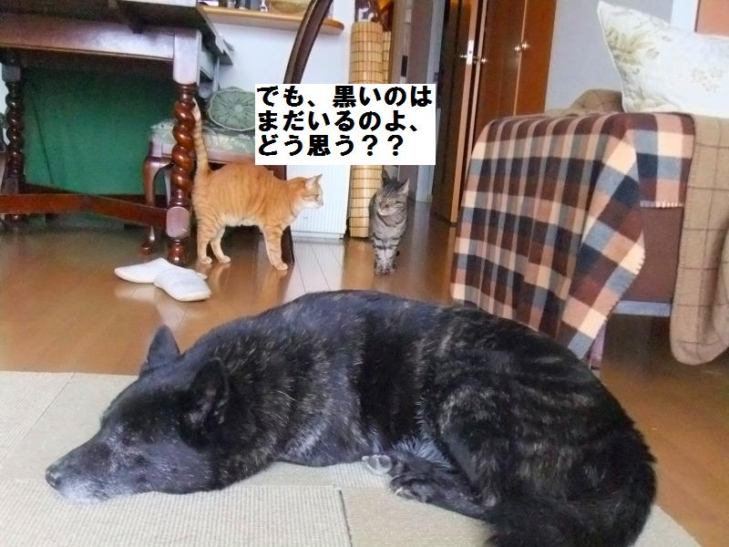 a0147921_20122121.jpg